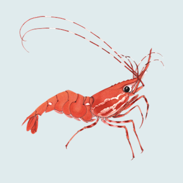 Ether Shrimp Farm logo