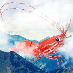 Tron Shrimp 2 logo