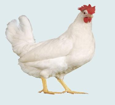 Ether Chicken Farm logo