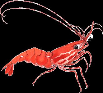 Shrimpfarm logo